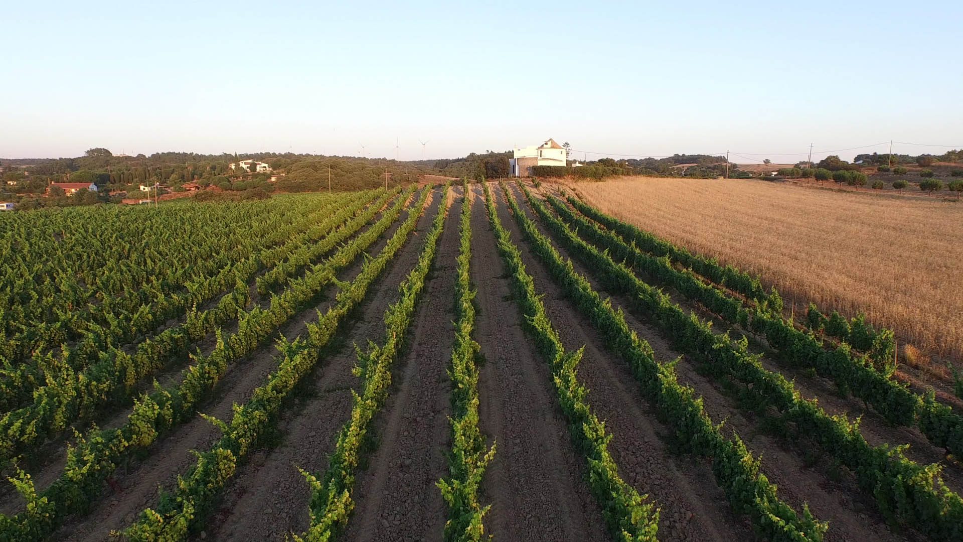 Associação de Vinhos e Espirituosas de Portugal